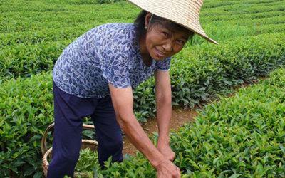 What is Fair Trade